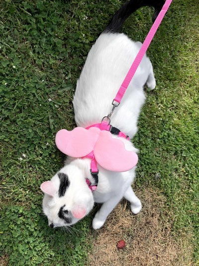 Cat Leash & Harness With Wings
