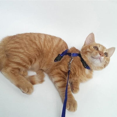 $14.50 - ADJUSTABLE CAT LEASH WITH HARNESS SET (NO ESCAPE) (9) TRAVEL PETS