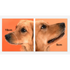 $34.95 - ADJUSTABLE MESH DOG MUZZLE (4) TRAVEL PETS