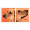 $34.95 - ADJUSTABLE MESH DOG MUZZLE (5) TRAVEL PETS