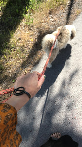 DOG LEASH TROLLE