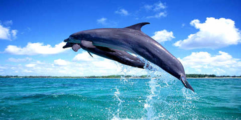 Bohol Dolphin Watching and Snorkeling at Balicasag Island with Guide