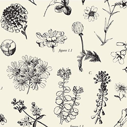 Botanical Illustrations