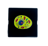 Body cell animal biology cell pin