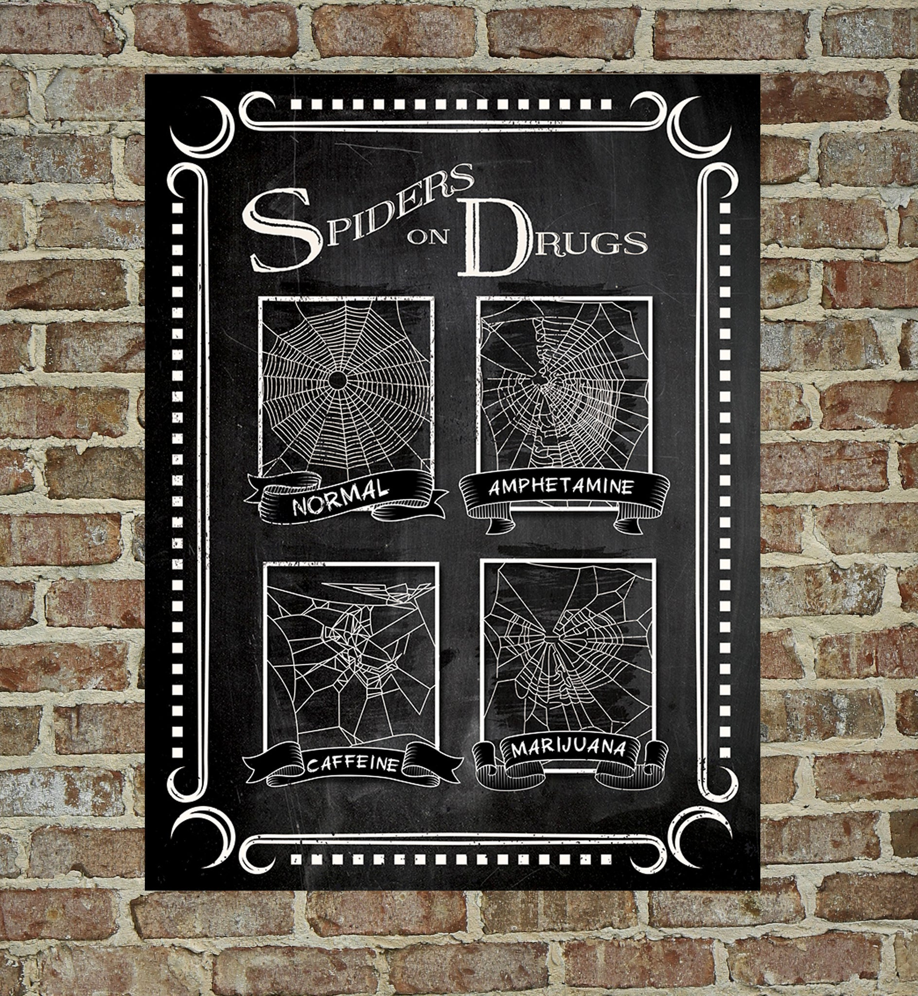 Spiders on Drugs Poster – Anatomology