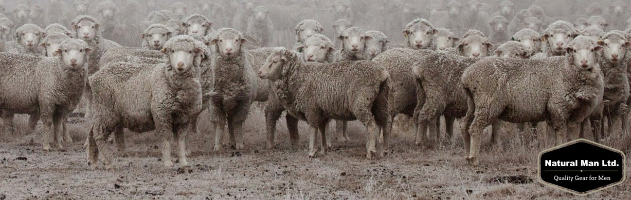 So what's all the fuss about Merino?
