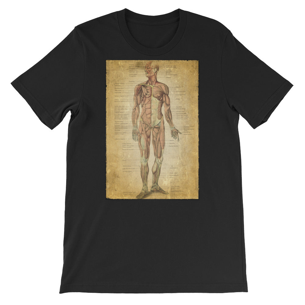 Vintage Anatomical Image on t-shirt, the Muscular System Anatomy