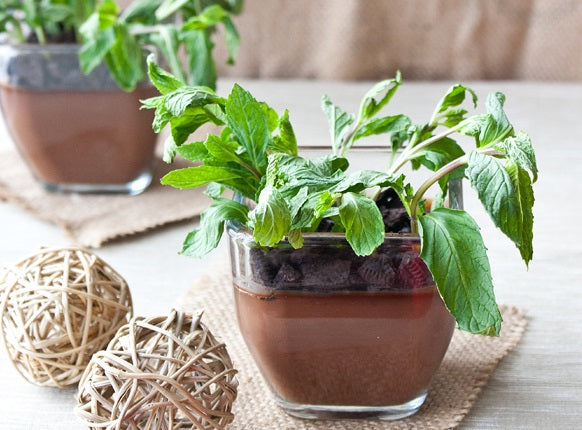 EARTH DAY - Potted Mint Chocolate Puddings