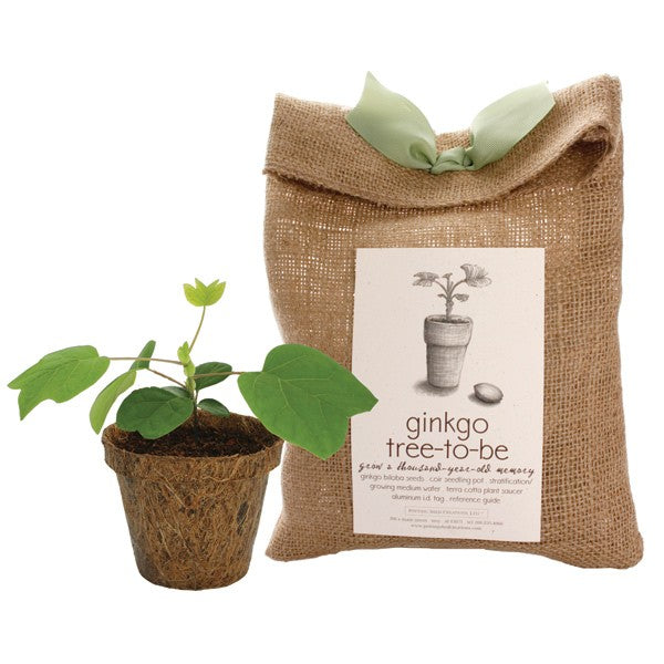 Tree-To-Be Kit - Ginkgo