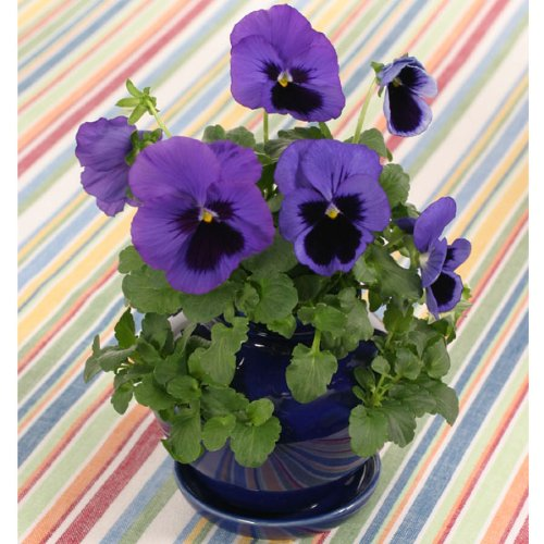 Pansy Pocket Garden Planter