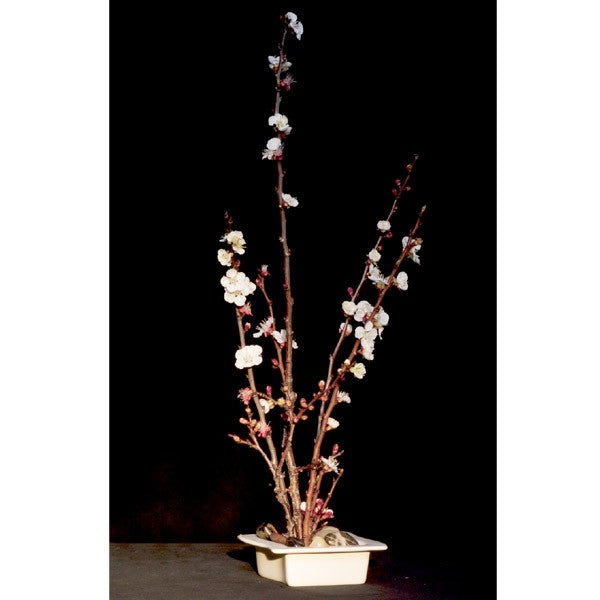 The Art Of Ikebana Vase - Square/white