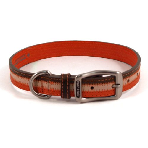 Sassy Orange Dog Collar