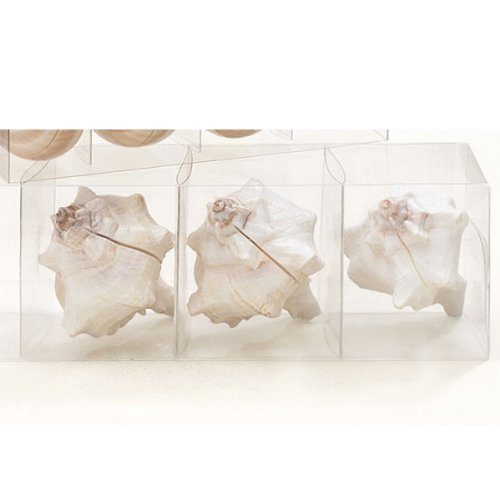 Shell Placecard Holders (set of 4)