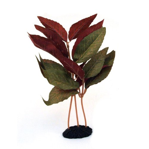 Alternanthera Plant Aquarium Decor