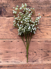 Gypsophila  21-inch small flower petals
