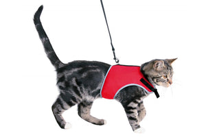 Soft Harness for Cats