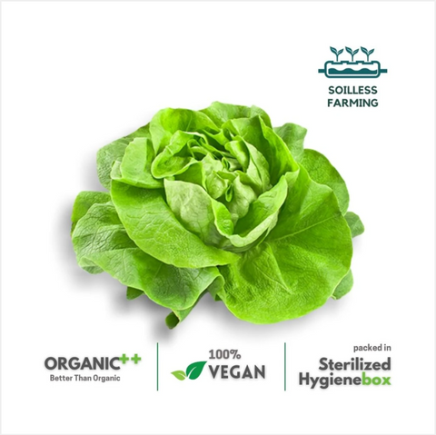 Butterhead Lettuce-  1 Box (100 gm)