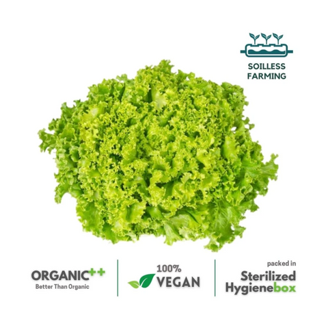 Lollo Green Lettuce -  1 Box (100 gm / 2 Pc)