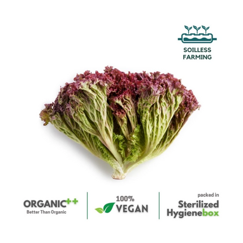 Lollo Red Lettuce -  1 Box (100 gm / 2 Pc)