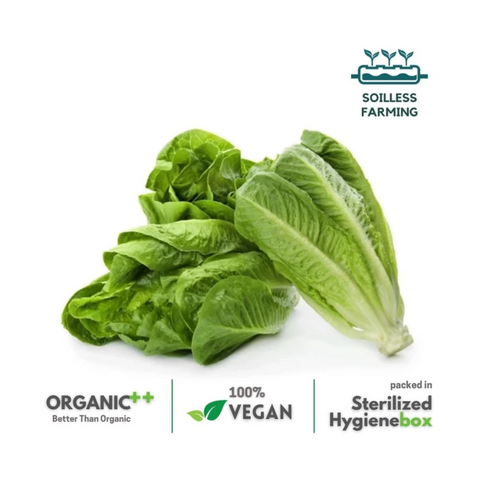 Rocking Romaine -  1 Box (100 gm / 2 Pc)