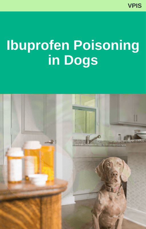 Veterinary Poison's Information Service Ibuprofen Poisoning in Dogs