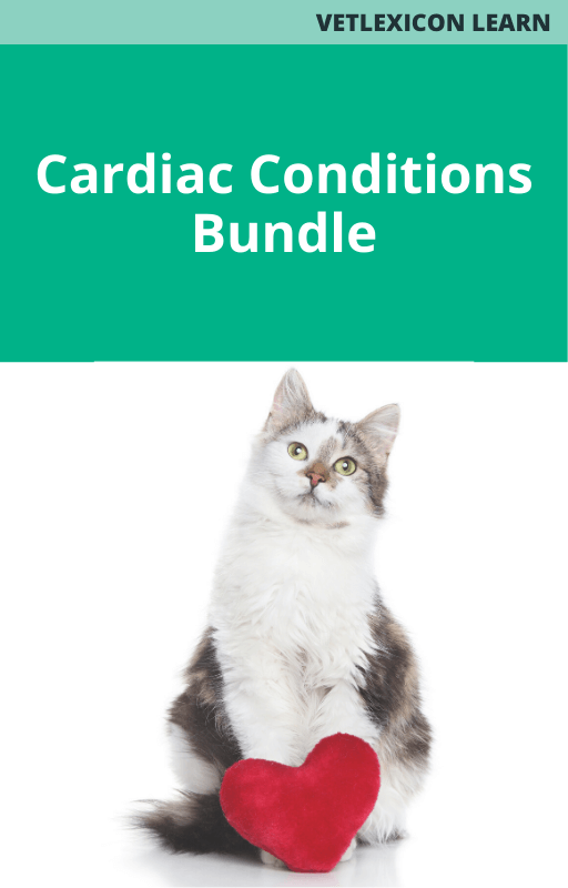 Cardiac Conditions Bundle