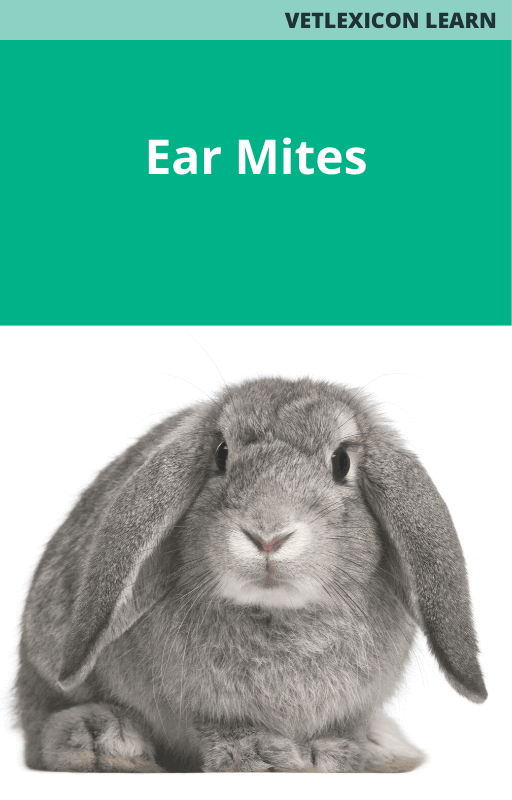 Ear Mites (Rabbits)