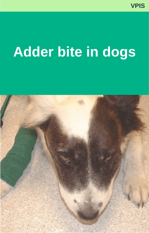 Adder bite in dogs