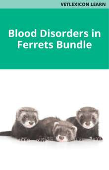 Blood Disorders in Ferrets Bundle