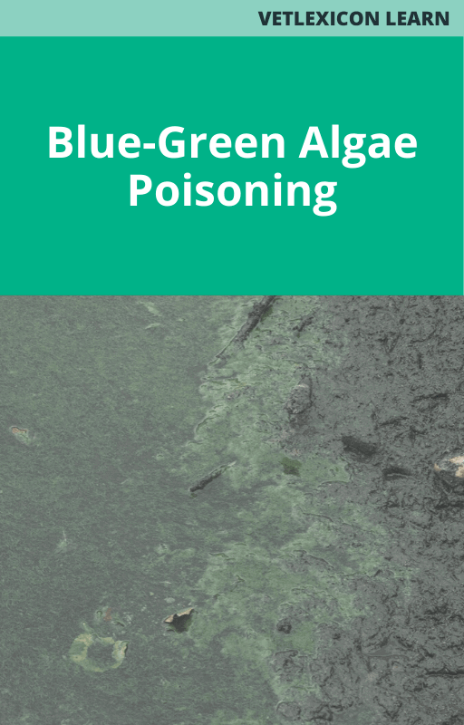 Blue-Green Algae Poisoning