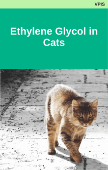 Ethylene Glycol in Cats