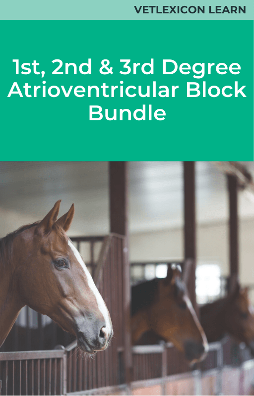 1st, 2nd and 3rd degree AV blocks bundle