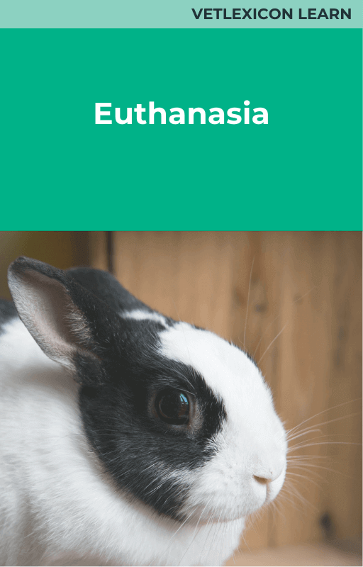 Euthanasia (Rabbit)