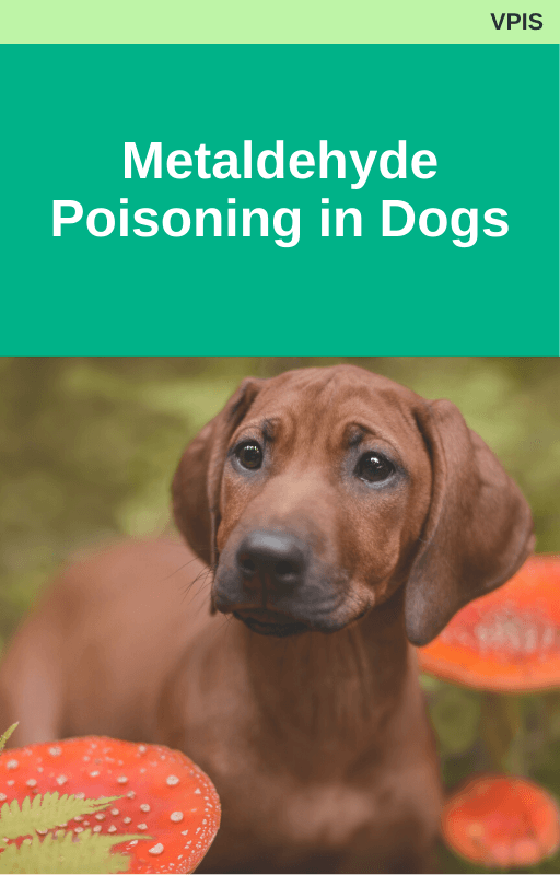 Metaldehyde Poisoning in Dogs