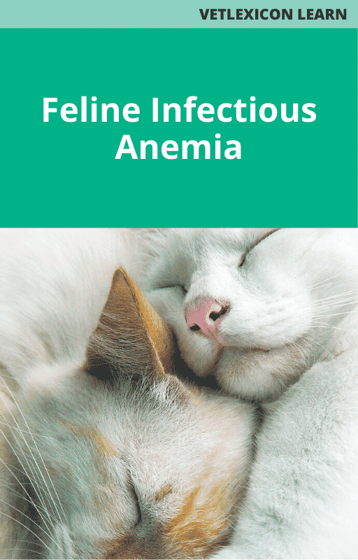 Feline Infectious Anemia