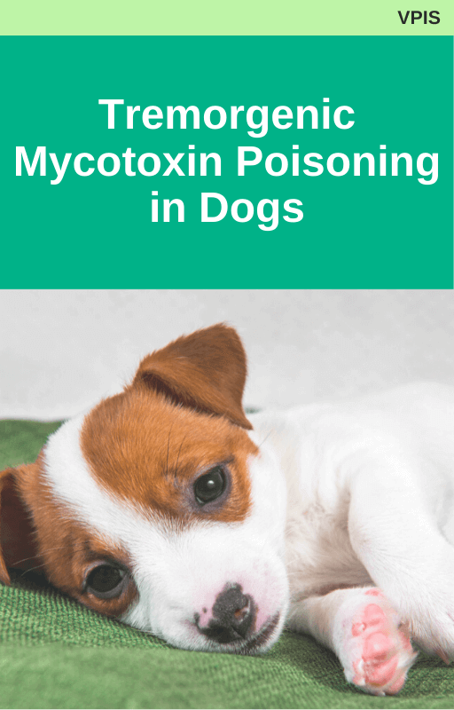 Tremorgenic Mycotoxin Poisoning in Dogs