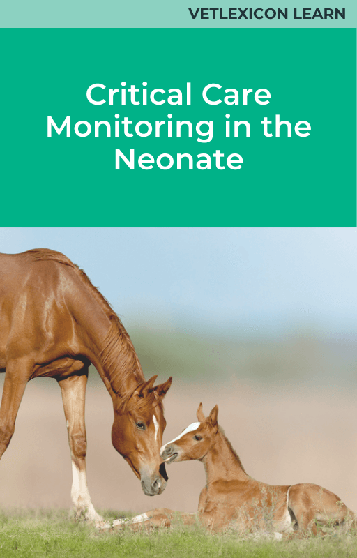 Equine Critical Care Monitoring in the Neonate