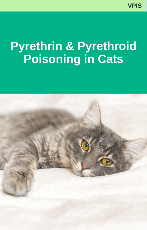 VPIS Pyrethrin and Pyrethroid Poisoning in Cats