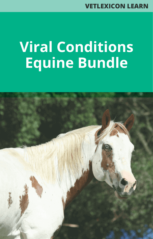 Viral Conditions Bundle - Equine