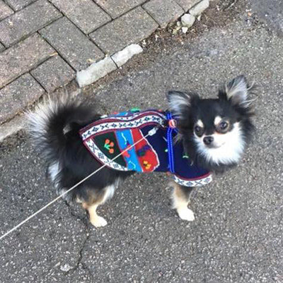 Size 1 Hand Embroidered Peruvian Dog Jumper Blue 21cm Chihuahua Clothes and Accessories at My Chi and Me