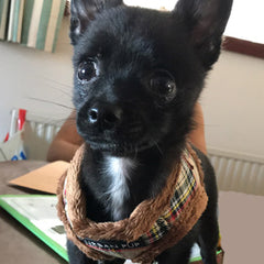 Urban Pup Faux Fur Lined Brown Tartan Chihuahua or Chihuahua Puppy Vest Harness Chihuahua Clothes and Accessories at My Chi and Me