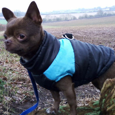 Gilet Style Dog Coat Water Resistant Black And Blue Padded Jacket Chihuahua Clothes and Accessories at My Chi and Me