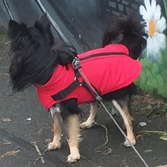 Trekker Samurai Small Dog Coat Inbuilt Harness Red