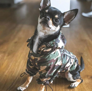 Urban Pup Chihuahua Puppy Chihuahua or Small Dog Green Camouflage Coat Rainstorm Jacket Chihuahua Clothes and Accessories at My Chi and Me
