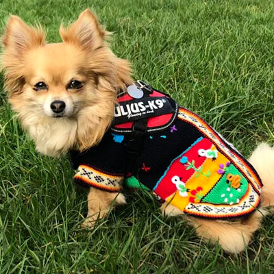 Size 2 Hand Embroidered Peruvian Dog Jumper Midnight Blue Red Yellow and Green 24cm