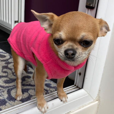 Chihuahua or Small Dog Fleece Jumper with D Rings For Leash Pink - My Chi and Me