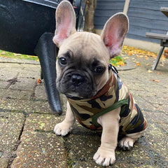 Wide Fit Premium Green Camouflage Gilet Small Dog Coat