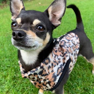 Premium Leopard Print Water Resistant Padded Gilet Style Coat Chihuahua or Small Dog Chihuahua Clothes and Accessories at My Chi and Me