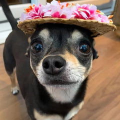 Floral Straw Sun Hat for Chihuahua Small Dog or Puppy
