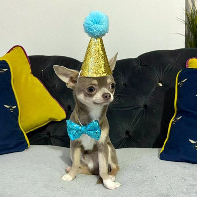Party Hat & Bow Tie Set for Small Dogs 4 Colours